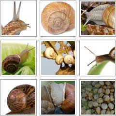snail-pictures