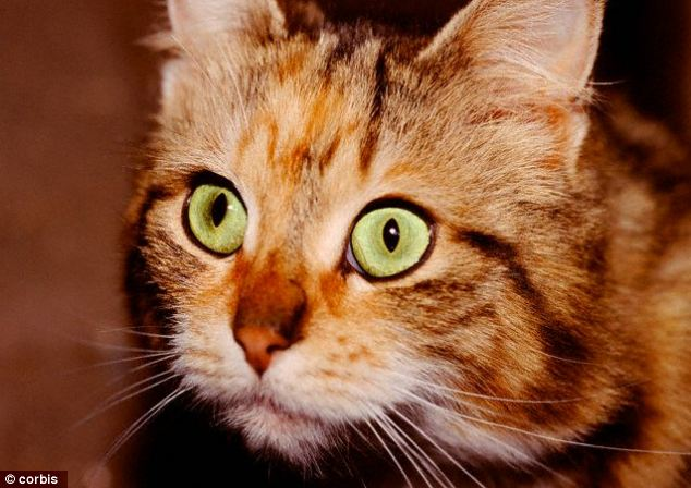 Cats eyes: Scientists have said that cats and dogs can see in ultraviolet ¿ so they can see things that humans can