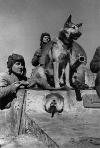 Dogs_in_war