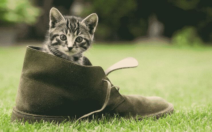 foto-of-a-young-cat-sitting-in-a-shoe-hd-cats-wallpapers