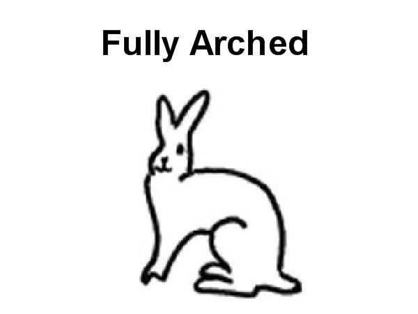 Fully Arched Rabbit Breeds