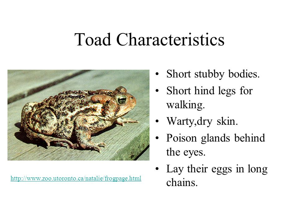 Toad Characteristics Short stubby bodies. Short hind legs for walking.