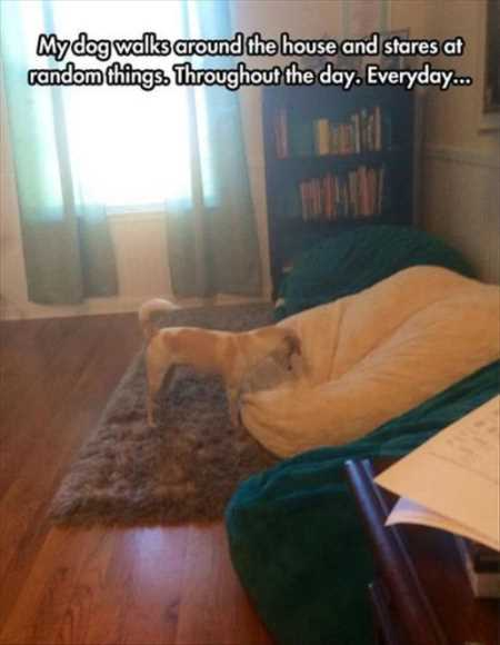 37 Hilarious Animal Pictures