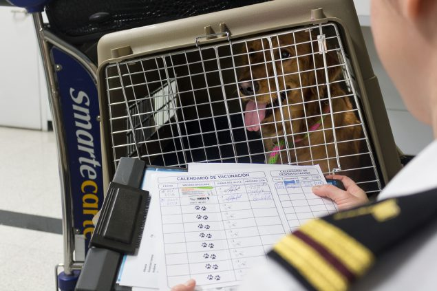 A public health worker wearing a white shirt with black and yellow epaulets reviews a rabies vaccine certificate on a clipboard while looking at a Golden Retriever sitting inside a dog travel crate
