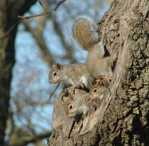 Squirrel Den
